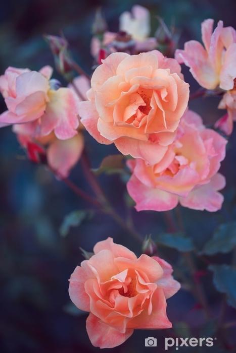 Abwaschbare Fototapete Gartenrosen. Blumen in der Natur. Weinlese-Frühlingsfoto - Pflanzen und Blumen