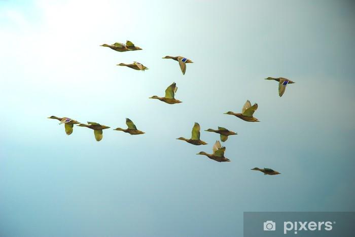 ducks Door Sticker - Skies
