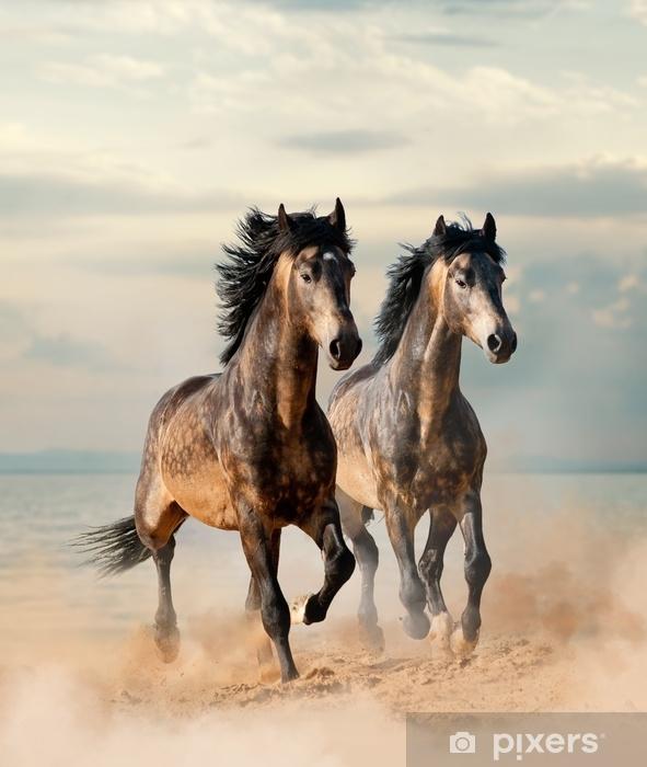 Vinyl Fotobehang Twee prachtige paarden die langs de zee rennen - Dieren
