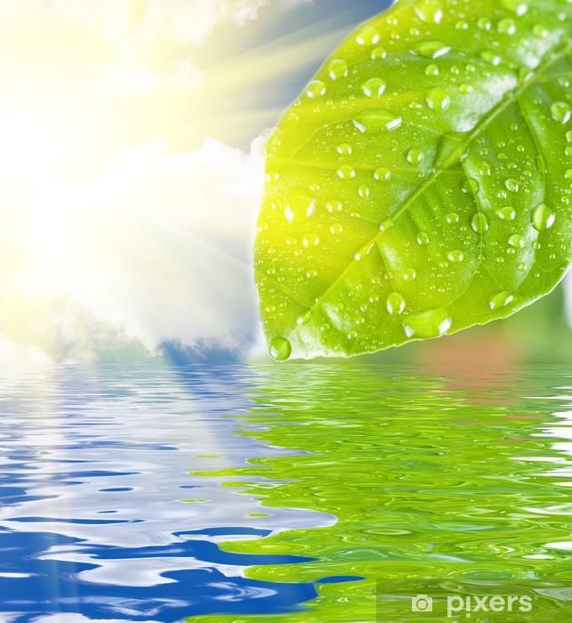 Papier peint vinyle L'eau verte congé - Fleurs
