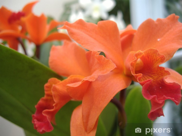 Sticker Pixerstick Orchidee orange - Fleurs