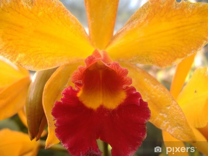 Naklejka Pixerstick Czerwony i żółty storczyk - Kwiaty