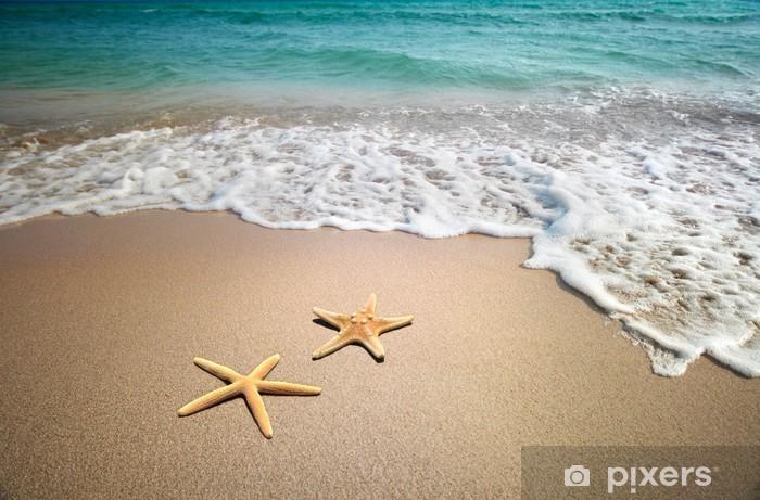 Vinilo Pixerstick Dos estrellas de mar en una playa - Temas