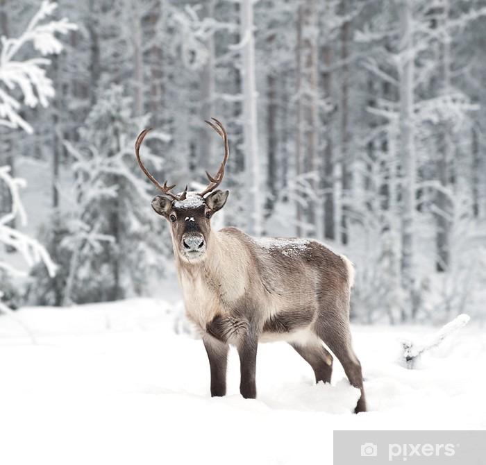 Vinyl Fotobehang Reindeer - Stijlen