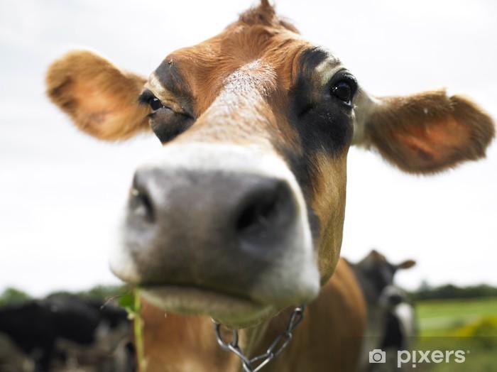 Lehmät tilalla Pixerstick tarra - Nisäkkäät