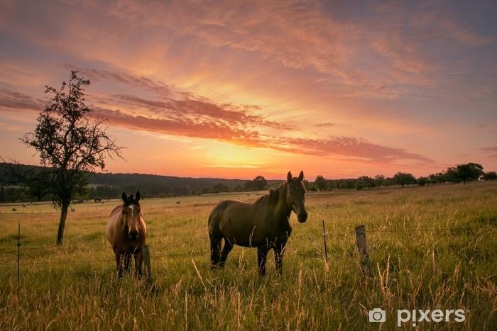 Afwasbaar Fotobehang Sonnenaufgang - Dieren