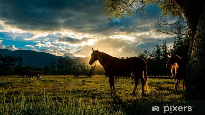 Afwasbaar Fotobehang Zonsondergang paard - Landschappen