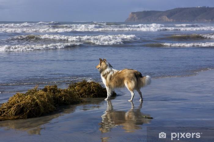 Naklejka Pixerstick Na plaży - Ssaki