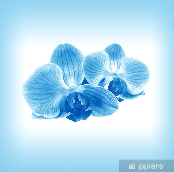 Vinyl-Fototapete Blume Orchidee in blauen Dunst - Blumen