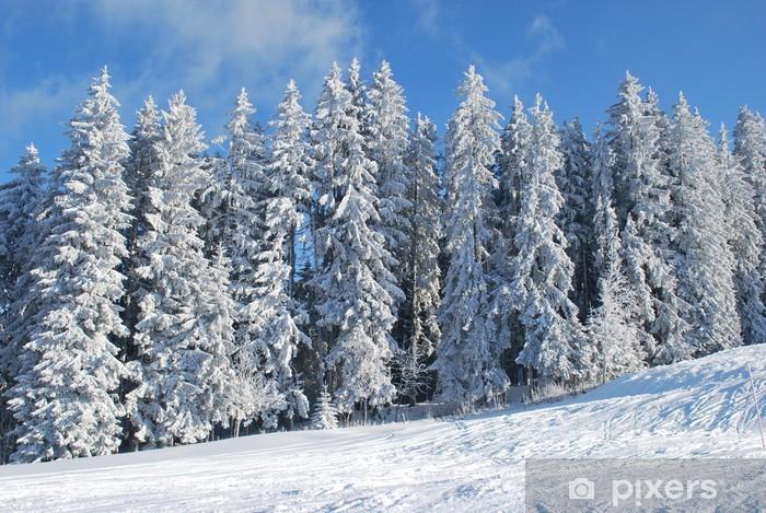 Fototapeta winylowa Snowy drzew - Drzewa