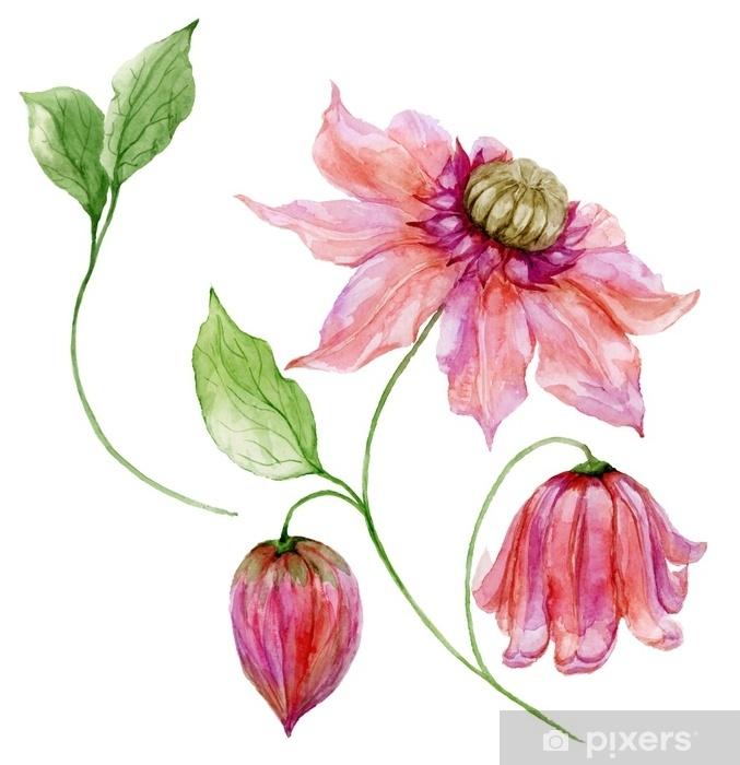 Bir Sap üzerinde Güzel Pembe Akasma çiçek Seti çiçek Tırmanma Dal
