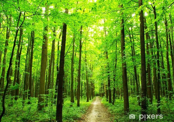 Sticker Pixerstick Chemin forestier - Merveilles naturelles