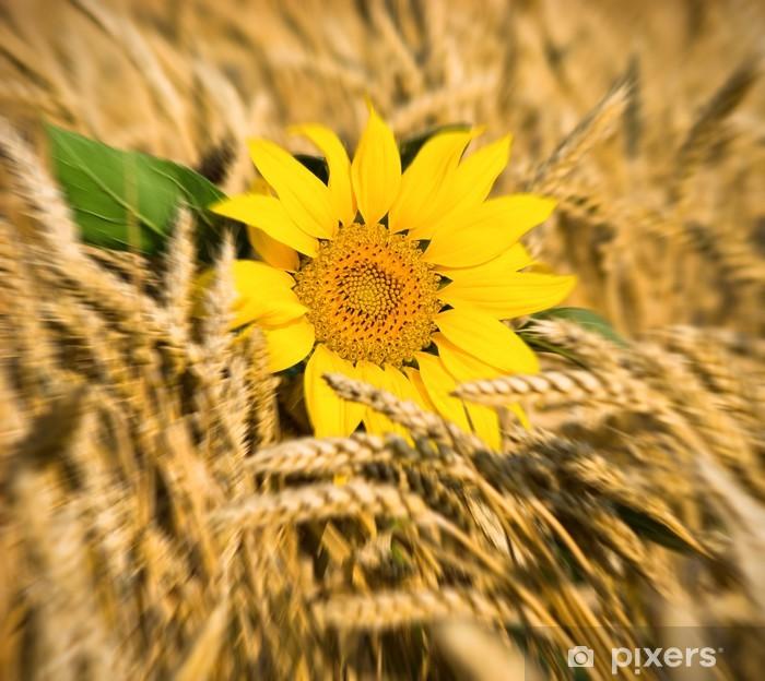 Poster Sonnenblumen auf dem Feld von Weizen - Landwirtschaft