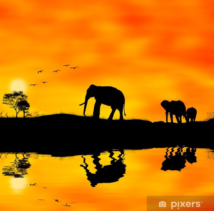 Vinyl Fotobehang Elefanti afrika - Thema's