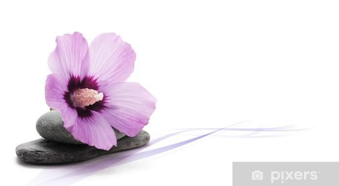 Image Decoration Zen Relaxation Fleur Rose Decor Fond Blanc Wall