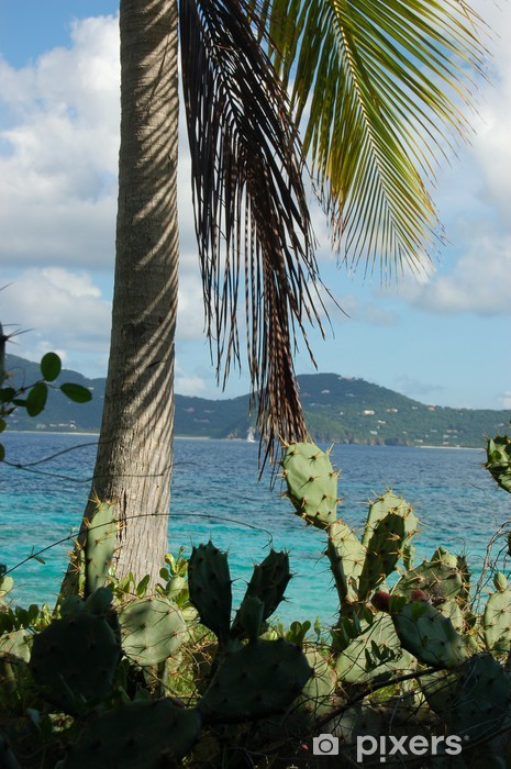 Vinyl-Fototapete Kakteen und Palmen am einsamen Insel - Urlaub