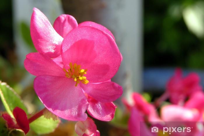 Naklejka Pixerstick Eisbegonie - Rośliny