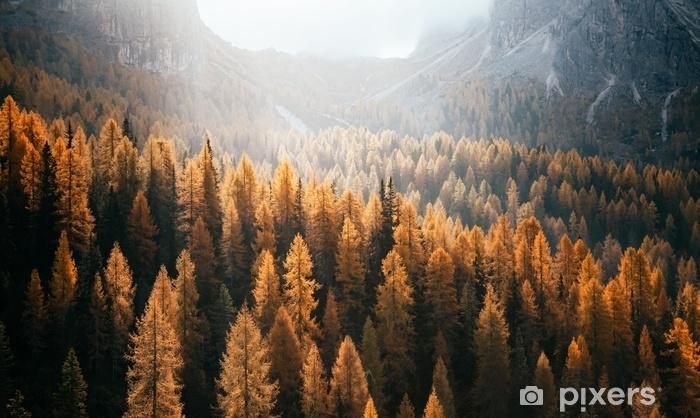 Vinyl Fotobehang Geweldig uitzicht op de gele lariksen. nationaal park tre cime di lavaredo, dolomiti alp, Tirol, Italië. - Landschappen