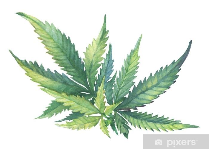 Sticker Pixerstick Une branche verte de cannabis sativa (cannabis indica, marijuana), plante médicinale à feuilles. aquarelle main dessinée illustration de peinture isolée sur fond blanc. - Plantes et fleurs