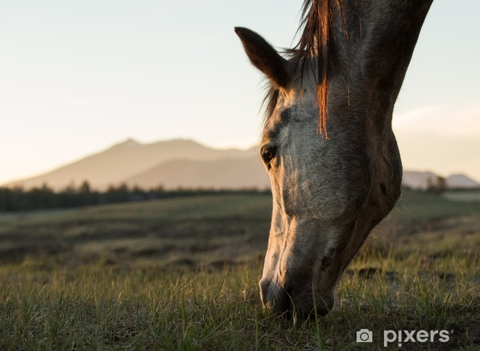 Horse Grazing at Sunset Vinyl Wall Mural - Animals