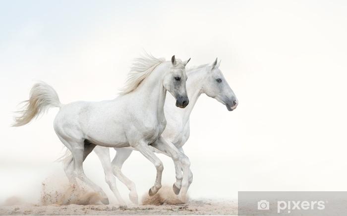 Carta da Parati in Vinile Stalloni bianchi che corrono al galoppo - Animali