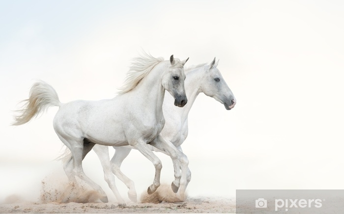 White stallions running gallop Vinyl Wall Mural - Animals