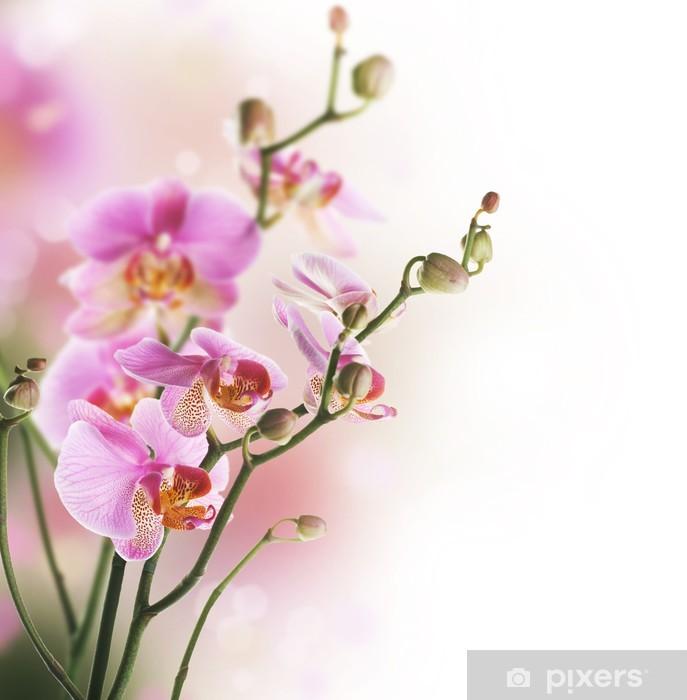 Fototapeta winylowa Piękne Orchid border.Isolated na white.Selective naciskiem - Tematy
