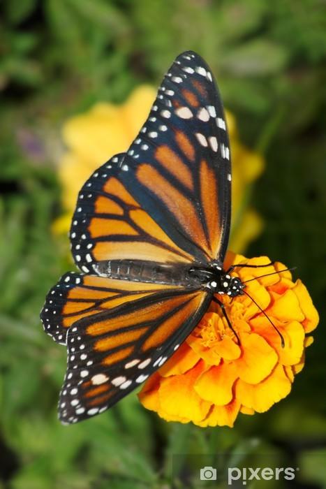 Sticker Pixerstick Papillon monarque - Thèmes