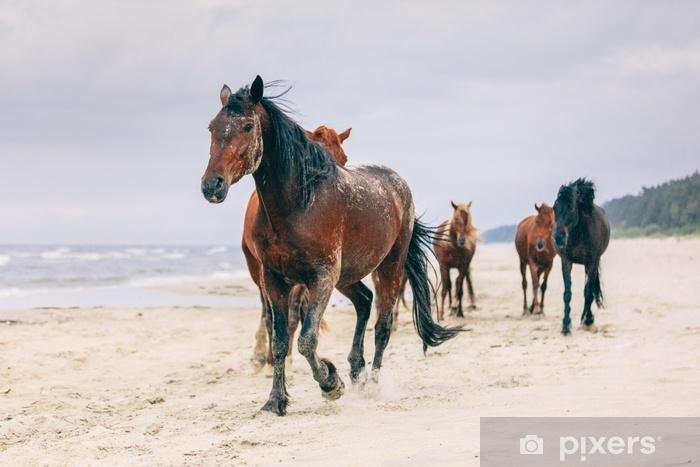 Fototapeta samoprzylepna Stado koni idące po wietrznym brzegu morza. - Zwierzęta