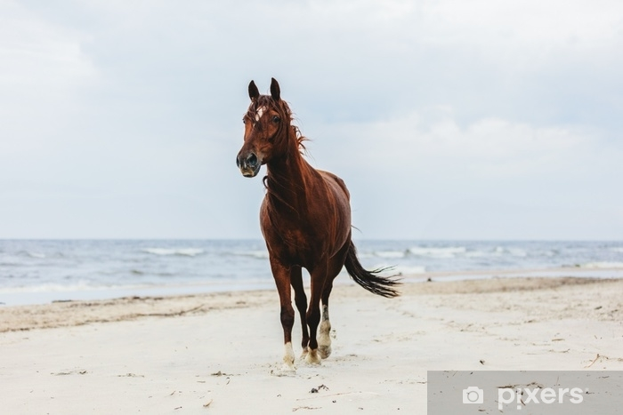 Vinyl Fotobehang Eenzame baai paard dravende op het strand door de zee. - Dieren