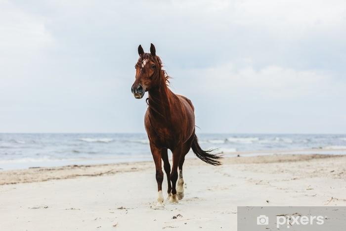 Fototapeta zmywalna Samotny koń zatoki kłusując na plaży nad morzem. - Zwierzęta