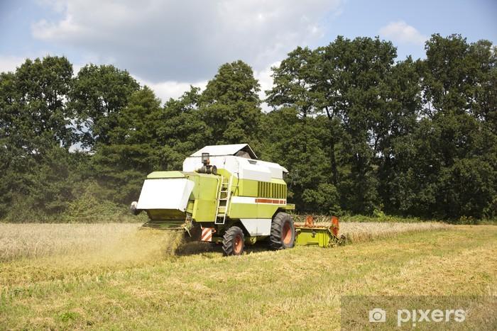 Vinyl-Fototapete Big Roder schneidet die reifen Samen von Getreide - Samen