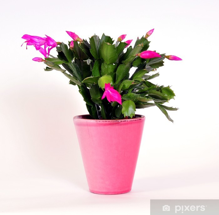 Naklejka Pixerstick Różowy Wielkanoc kaktus w doniczce - Pory roku