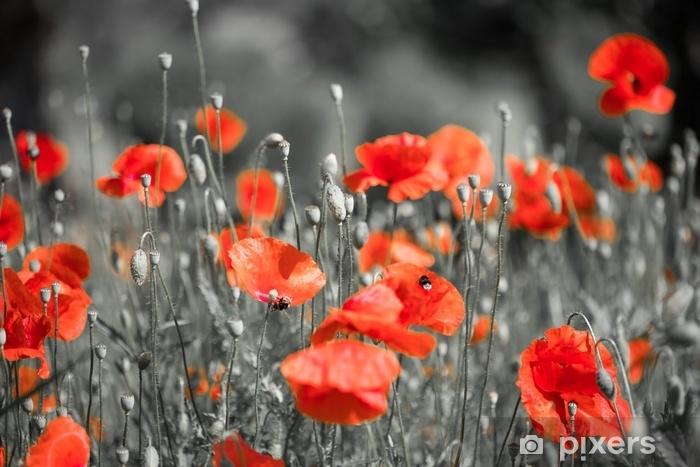Fototapete Feld Mit Vielblumen Sommer Schwarz Weiß Rot