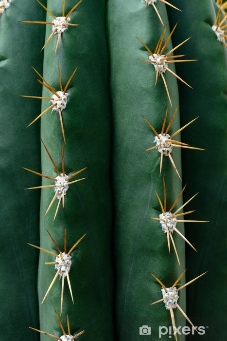close up texture of green cactus with needles Pixerstick Sticker - Plants and Flowers