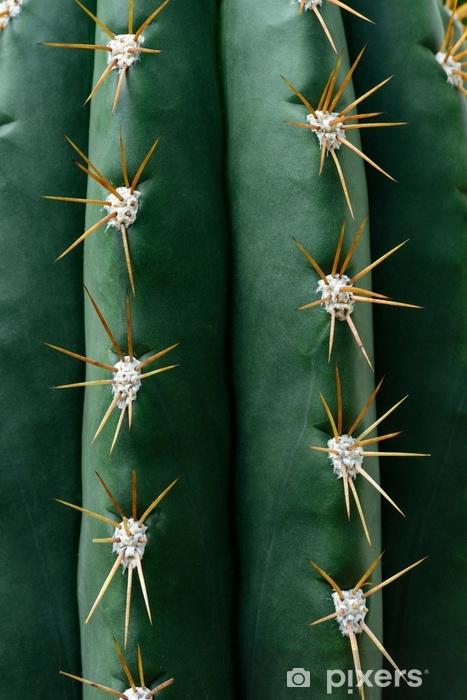 Vinilo Pixerstick Cerrar la textura de cactus verde con agujas - Plantas y flores