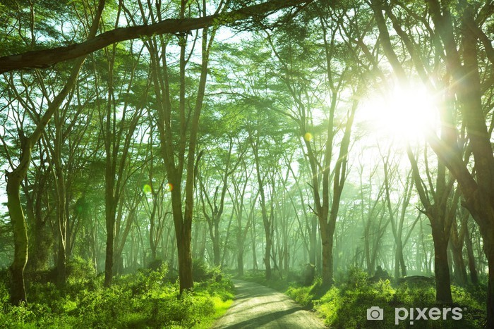 Fototapeta winylowa Dżungla - iStaging
