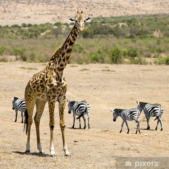 Naklejka Pixerstick Masai żyrafa - Tematy