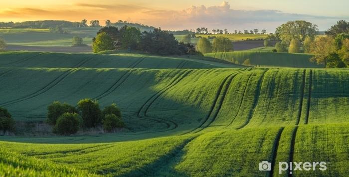 Naklejka Pixerstick Wysokiej rozdzielczości panorama pola wiosną młodych zbóż zielone oświetlone przez pierwsze promienie wschodzącego słońca - Krajobrazy