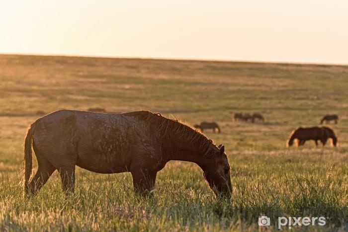Fototapeta winylowa Dzikie konie pasą się na łące o zachodzie słońca - Zwierzęta