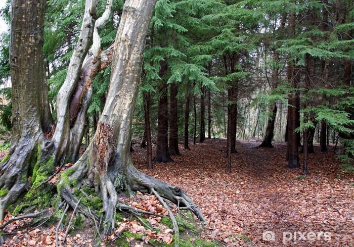 Naklejka Pixerstick Korzenie drzew liściastych i iglastych lasów z liści jesienią - Pory roku