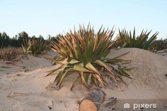 Papier peint vinyle Yucca sauvage dans les dunes de sable - Plantes