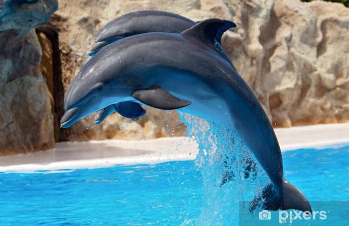 Vinyl-Fototapete Dolphins - Themen