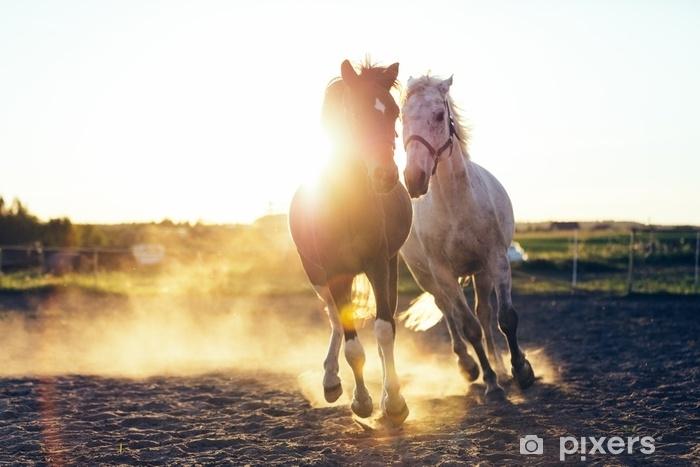 Fototapeta samoprzylepna Biały i ciemny koń galopujący w piasku - Zwierzęta