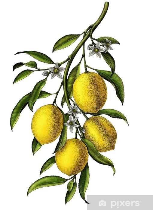 Naklejka Pixerstick Ilustracja kwiat cytryny oddział vintage clipart izolować na białym tle - Jedzenie