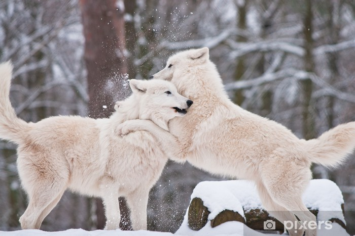 Wolfspaar Washable Wall Mural - Themes