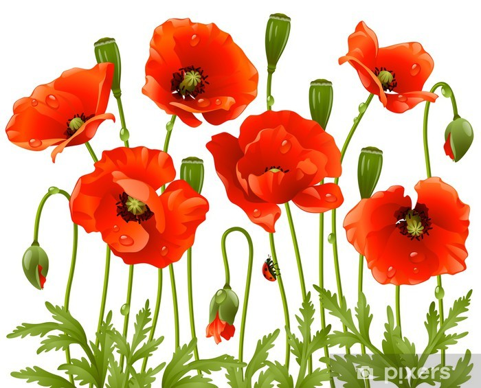 Sticker Pixerstick Fleurs de printemps: pavot - Ressources graphiques