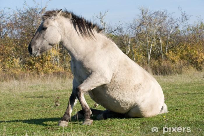 Nálepka Pixerstick Konik, Konikpferd beim Aufstehen - Savci