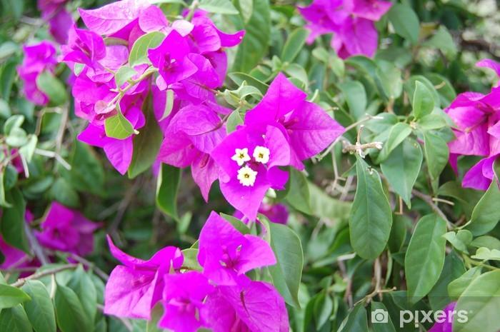 Papier peint vinyle Une petite fleur mauve de près ou macro - Fleurs