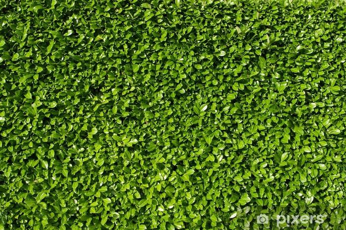 Adesivo Foglie Di Alloro Siepe Di Cespugli Di Alloro Verde Pixers